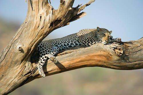 動物, 動物攝影, 哺乳動物, 捕食者 的 免费素材照片