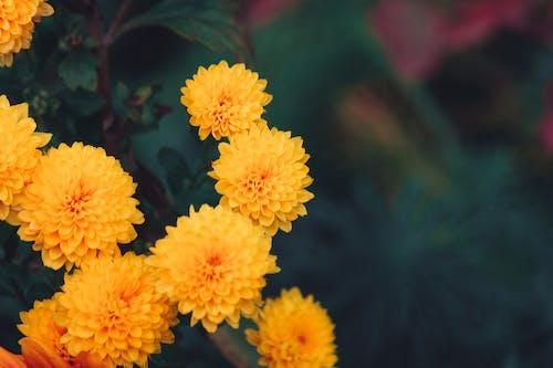 Безкоштовне стокове фото на тему «великий план, завод, квіти, квітка»