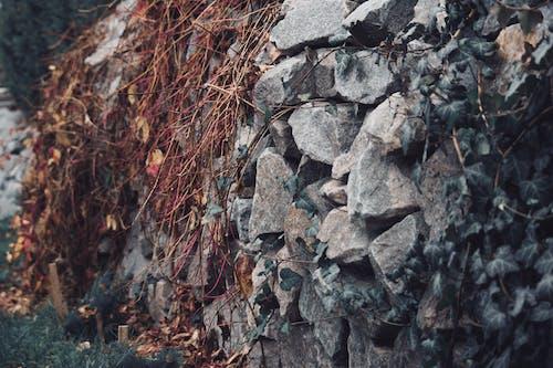 Foto d'estoc gratuïta de color, pedra, primer pla, roques