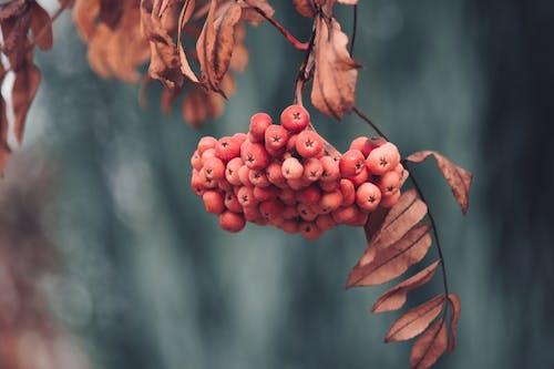 Foto stok gratis berbayang, beri, beri merah, buah