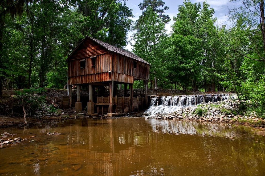 Alabama, békés, erdő
