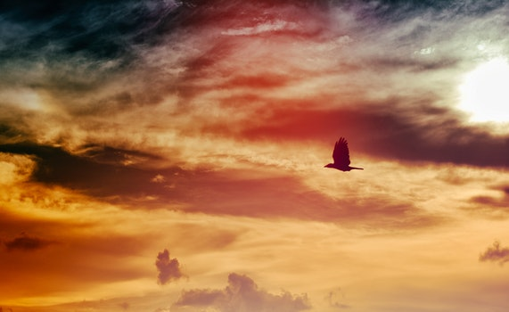 Black Bird Flying Under Black and White Clouded Sky at Daytime