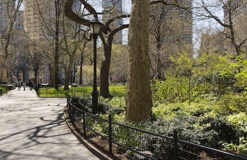 คลังภาพถ่ายฟรี ของ nyc, กั้นรั้ว, การจัดสวน, จุดสังเกต