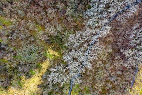 Gratis stockfoto met bird's eye view, bomen, Bos, bossen