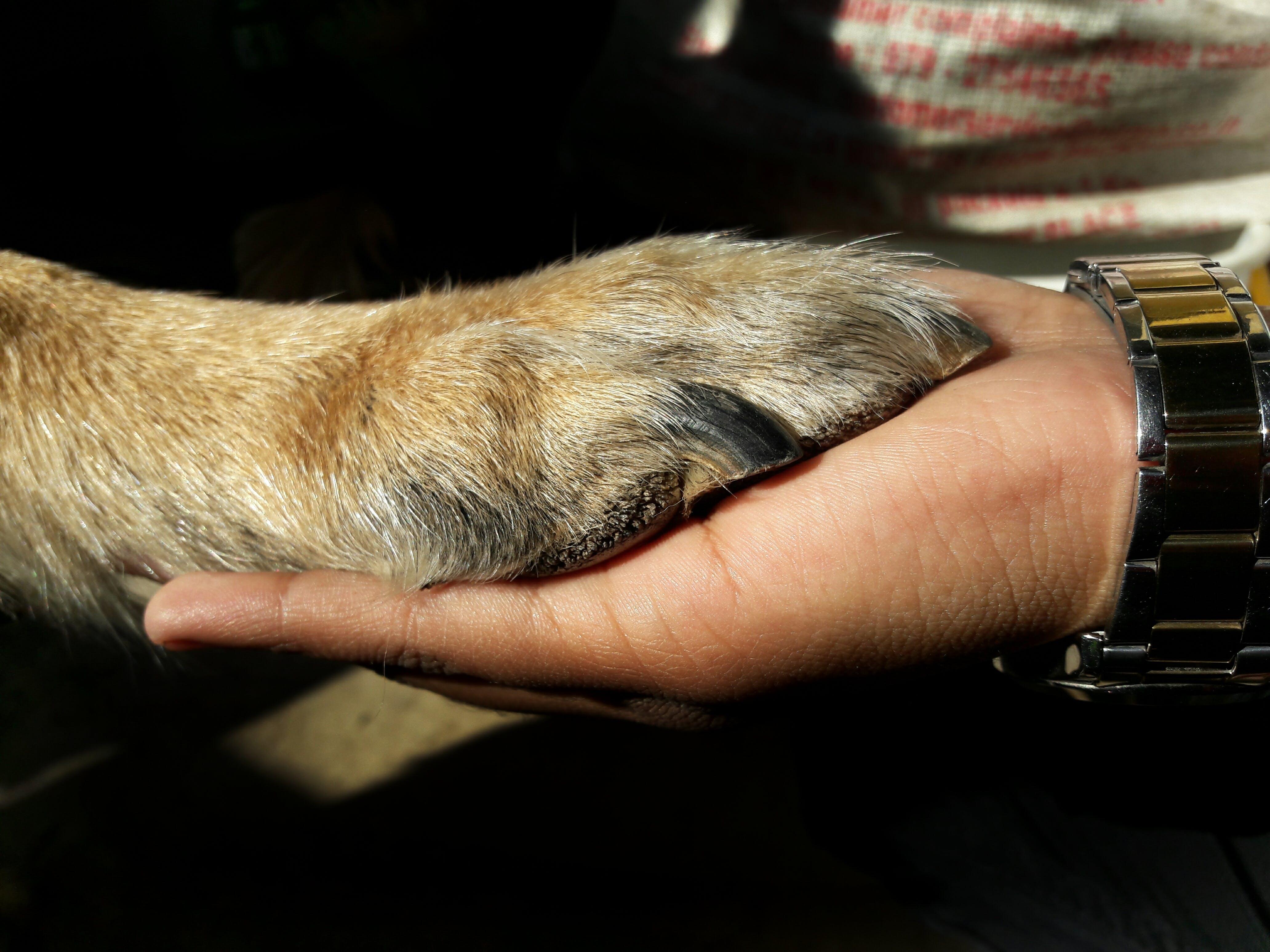 Gratis lagerfoto af hund kærlighed