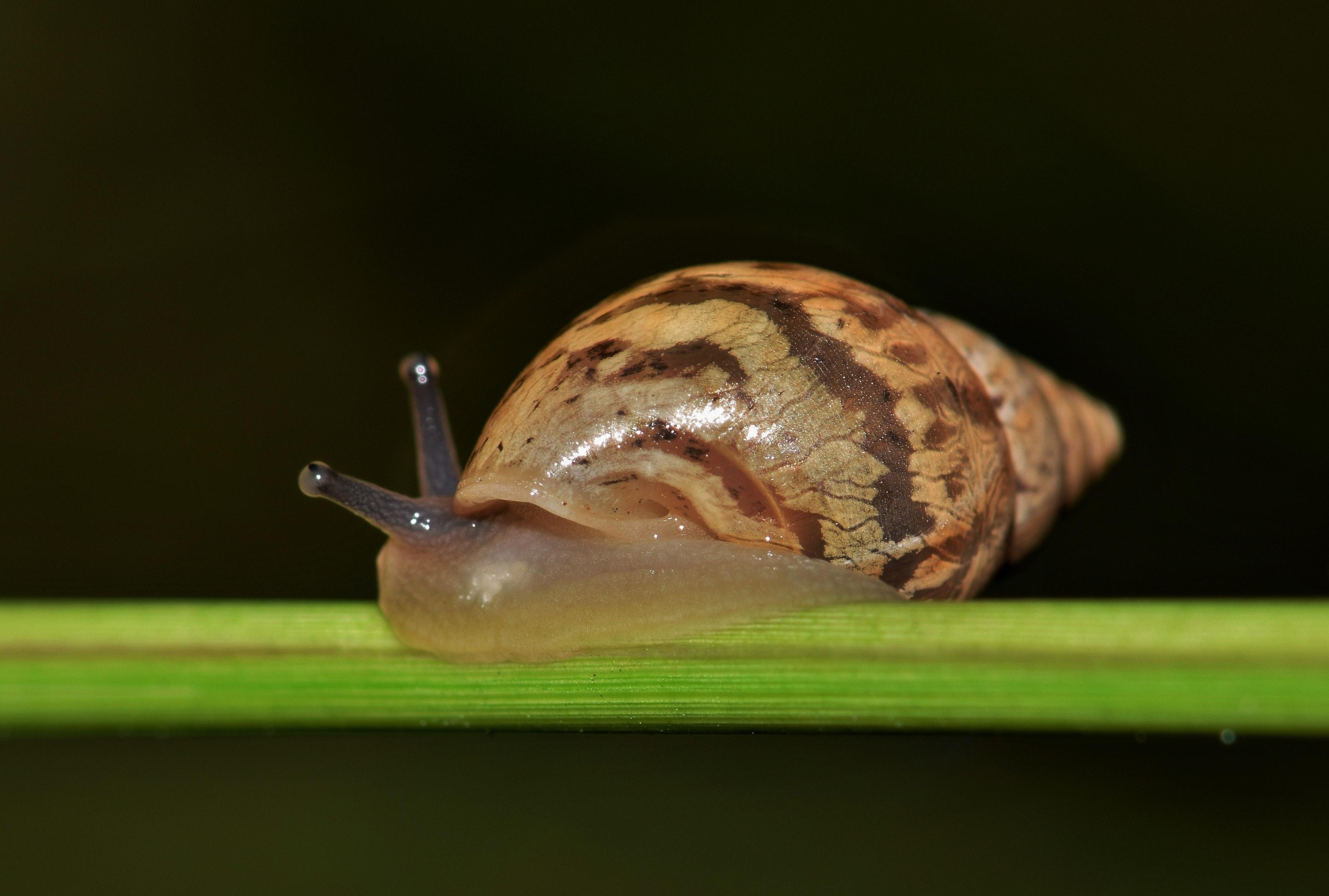 Free stock photo of animal, biology, close up