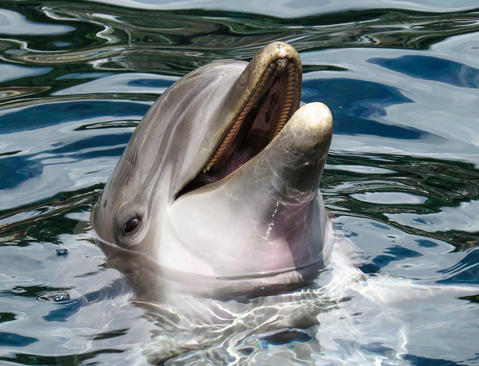 돌고래, 동물, 물