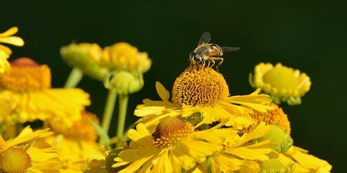 คลังภาพถ่ายฟรี ของ กลีบดอก, การถ่ายเรณู, ดอกไม้, พฤกษา