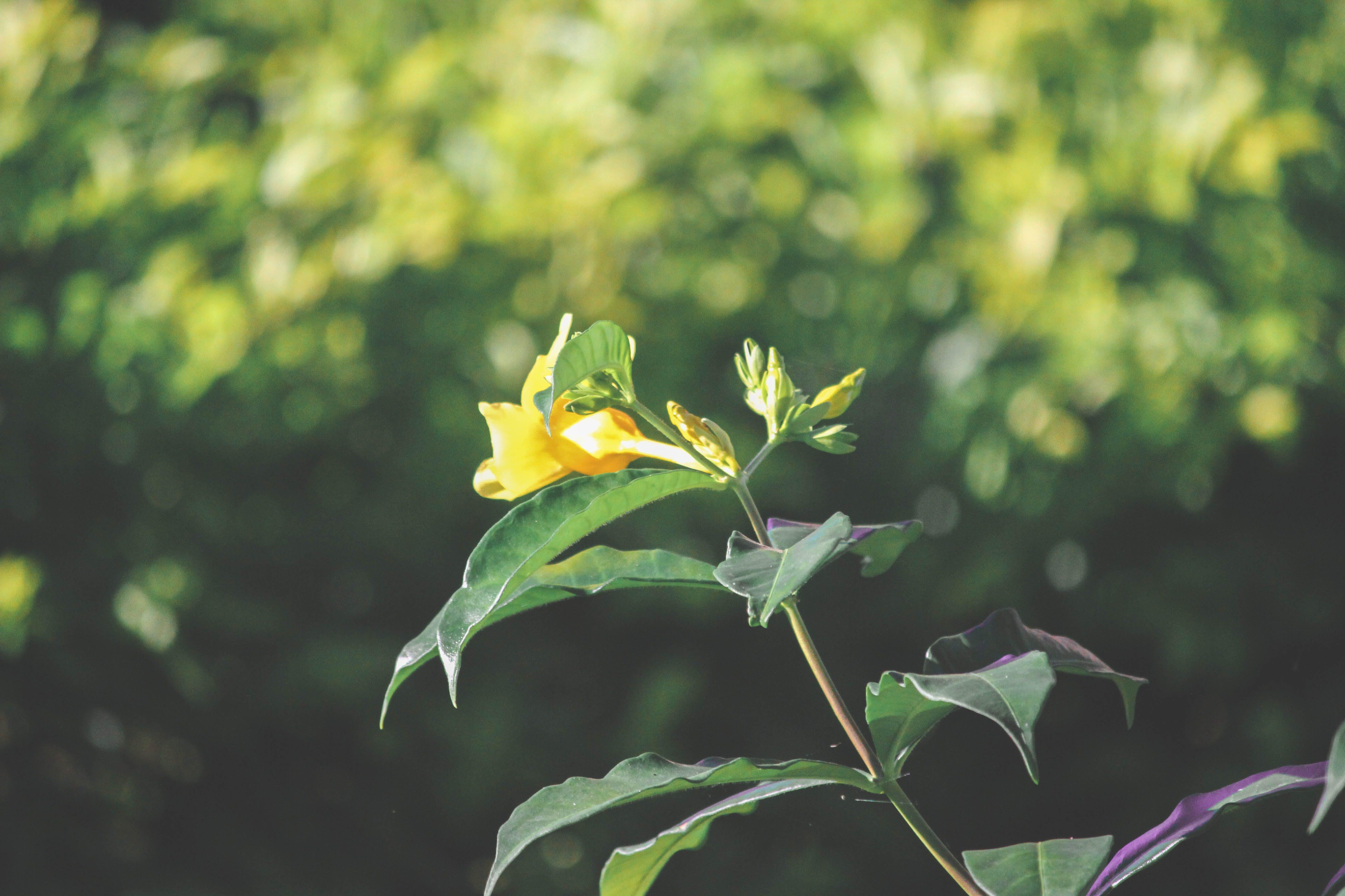 Kostenloses Stock Foto zu blume, dunkelgrün, gelb, gelbe blume