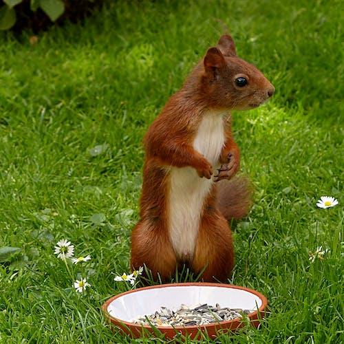 Imagine de stoc gratuită din adorabil, animal, faună sălbatică, iarbă