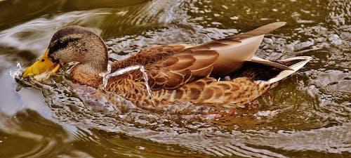 Foto profissional grátis de água, animais selvagens, animal, aves