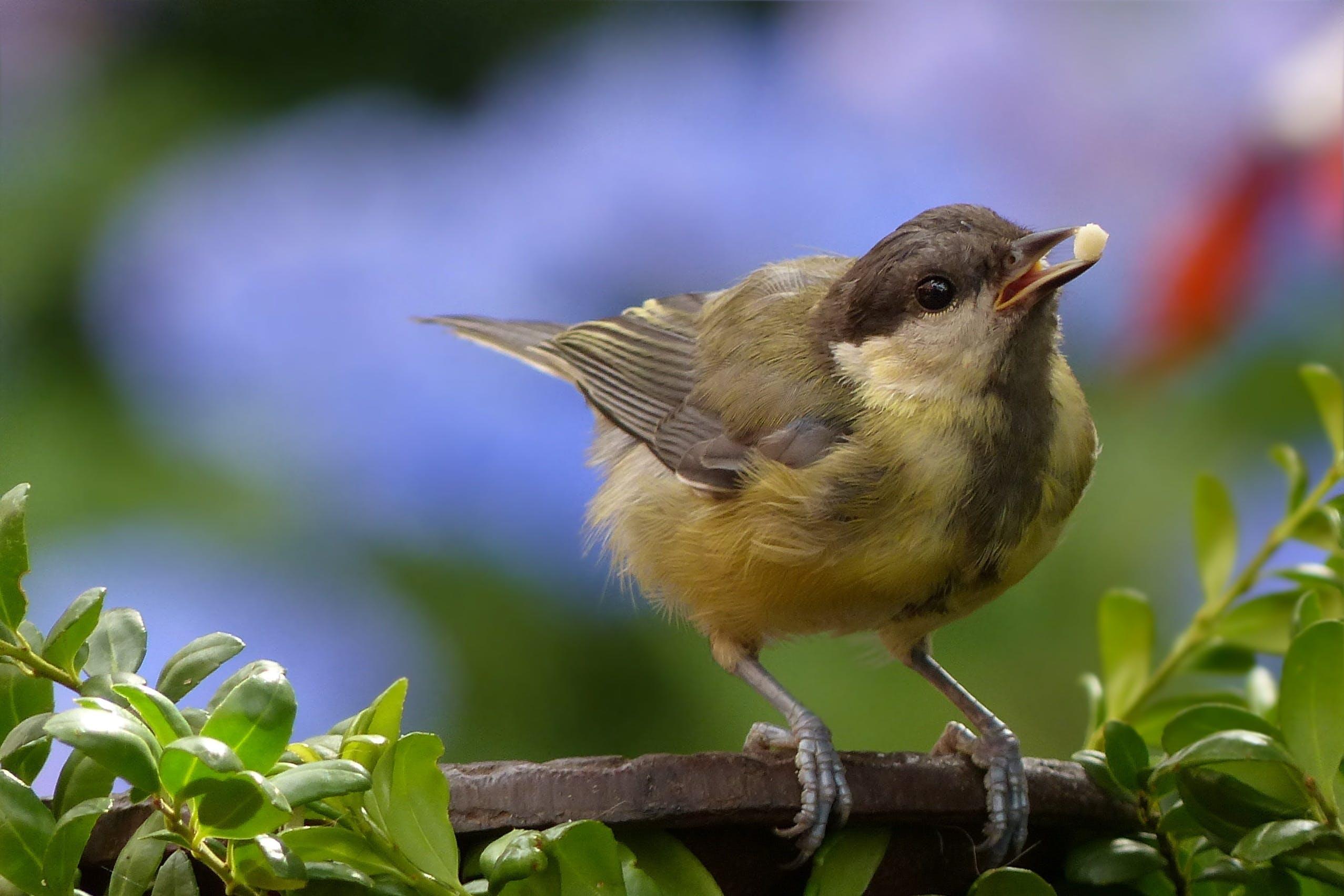 Yellow Brown Bird Perch on Tree