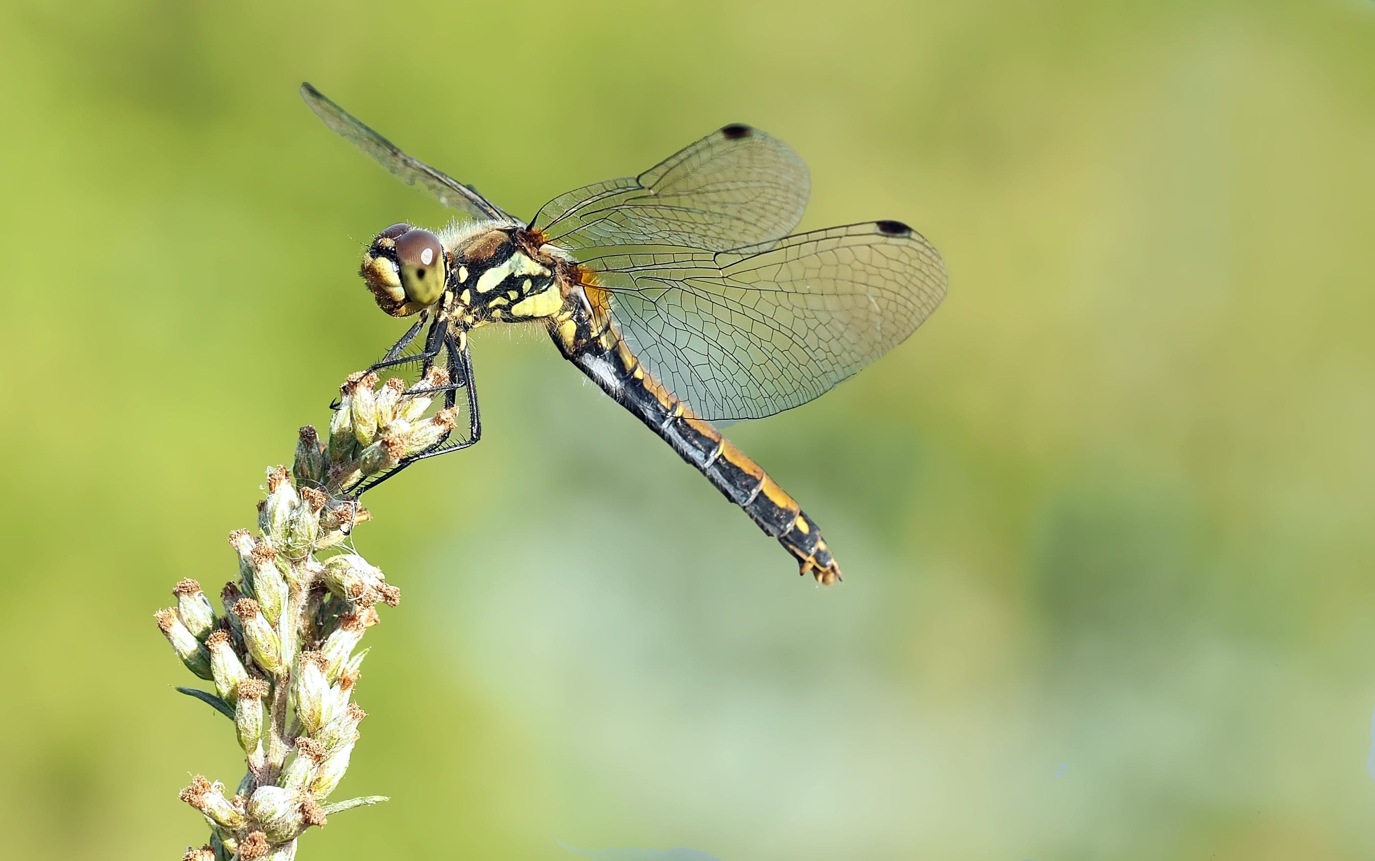 Free stock photo of animal, head, dragonflies, insect