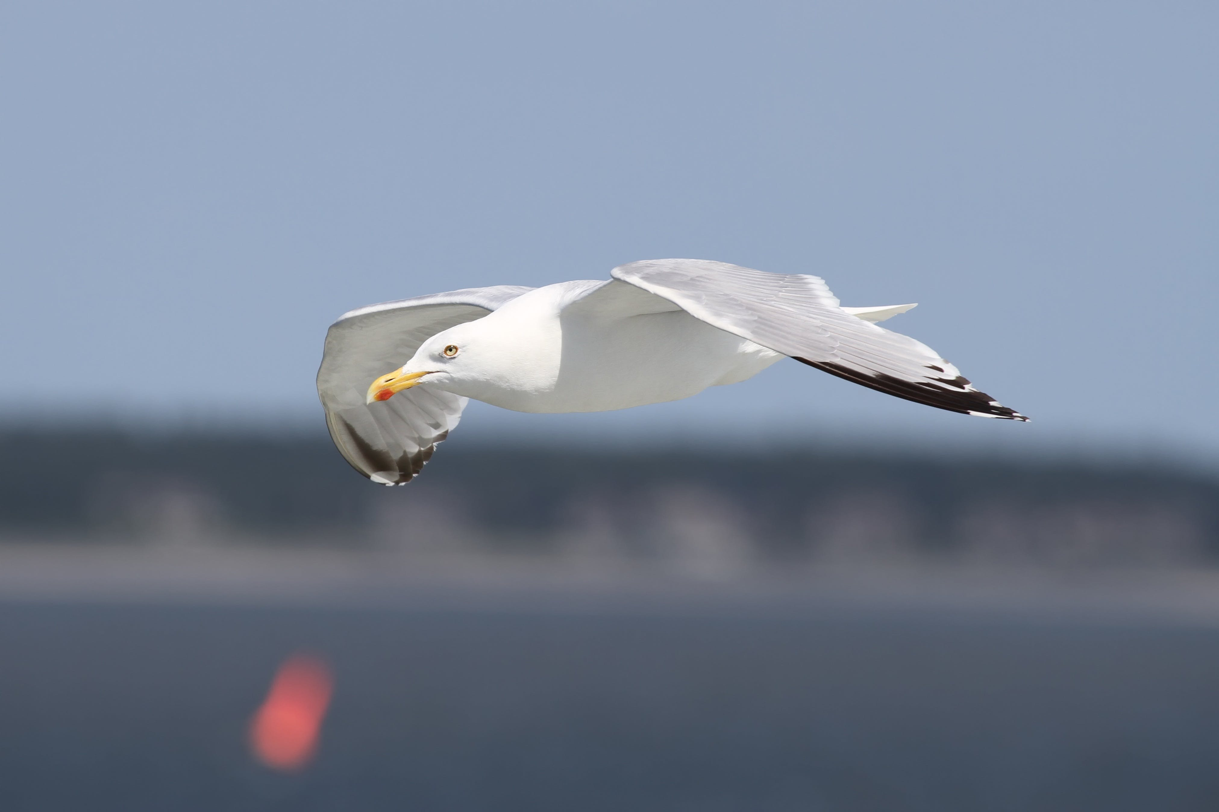 Auto Focus Photography of Flying White Bird during Daytime