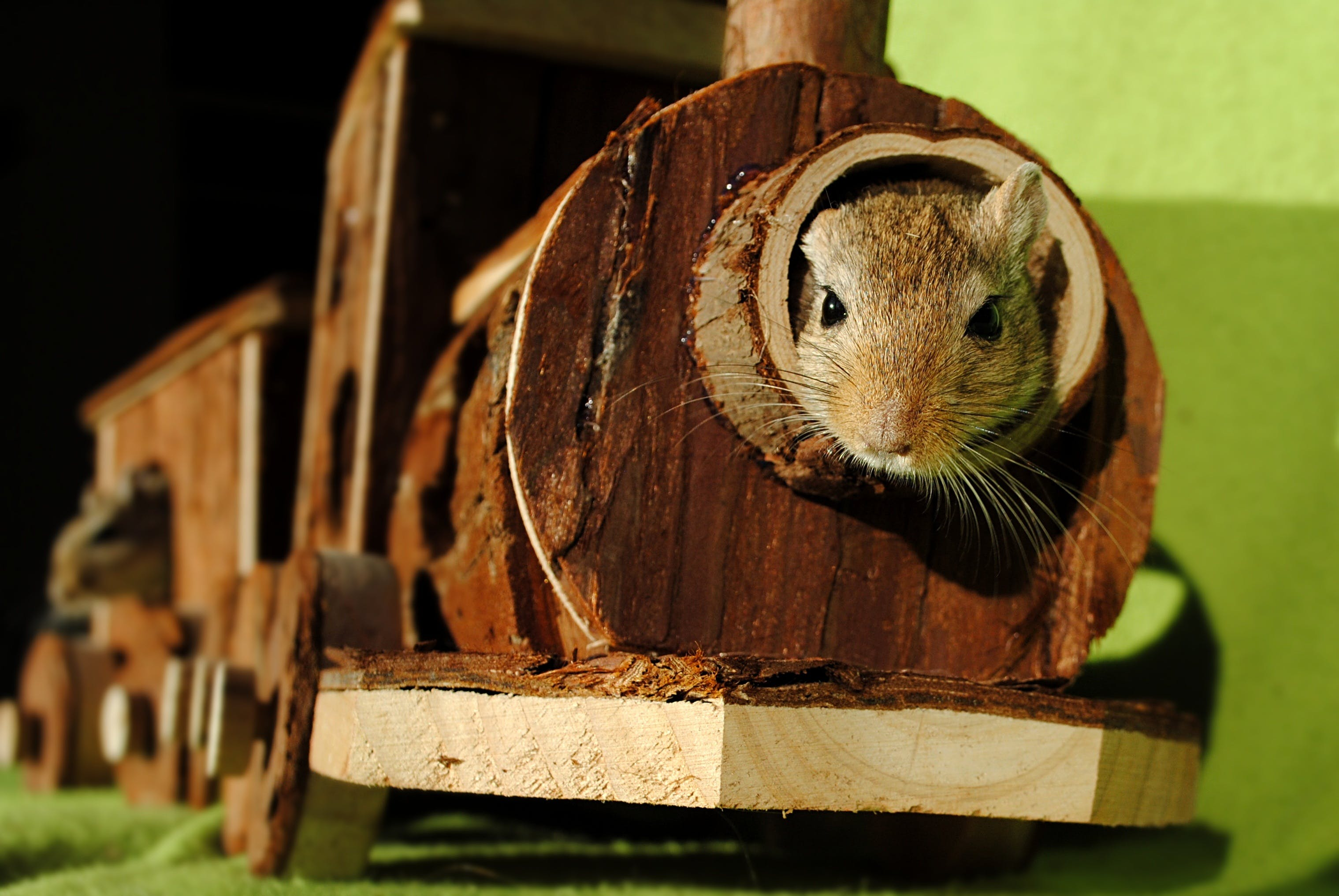 Brown Squirrel Inside of Brown Wooden Train Miniature