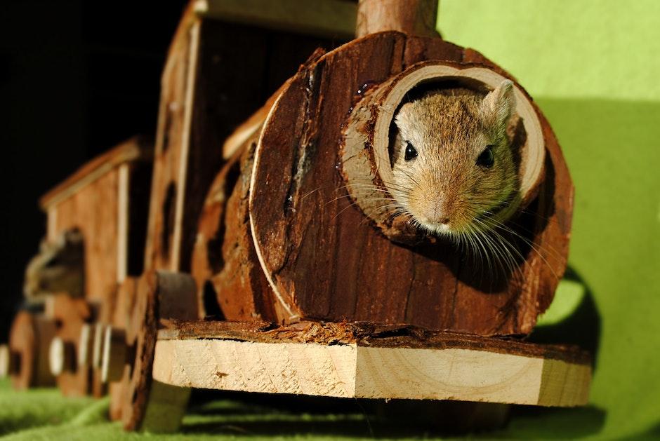 Brown Squirrel Inside of Brown Wooden Train Miniature