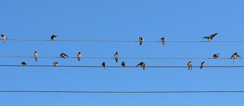 Free stock photo of birds, wire, stôl, swallow