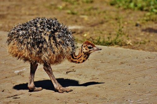 Foto d'estoc gratuïta de animal, paviment, plomatge, vida salvatge