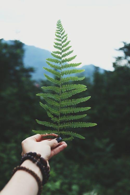 Immagine gratuita di felce, foglie, impianto, macro