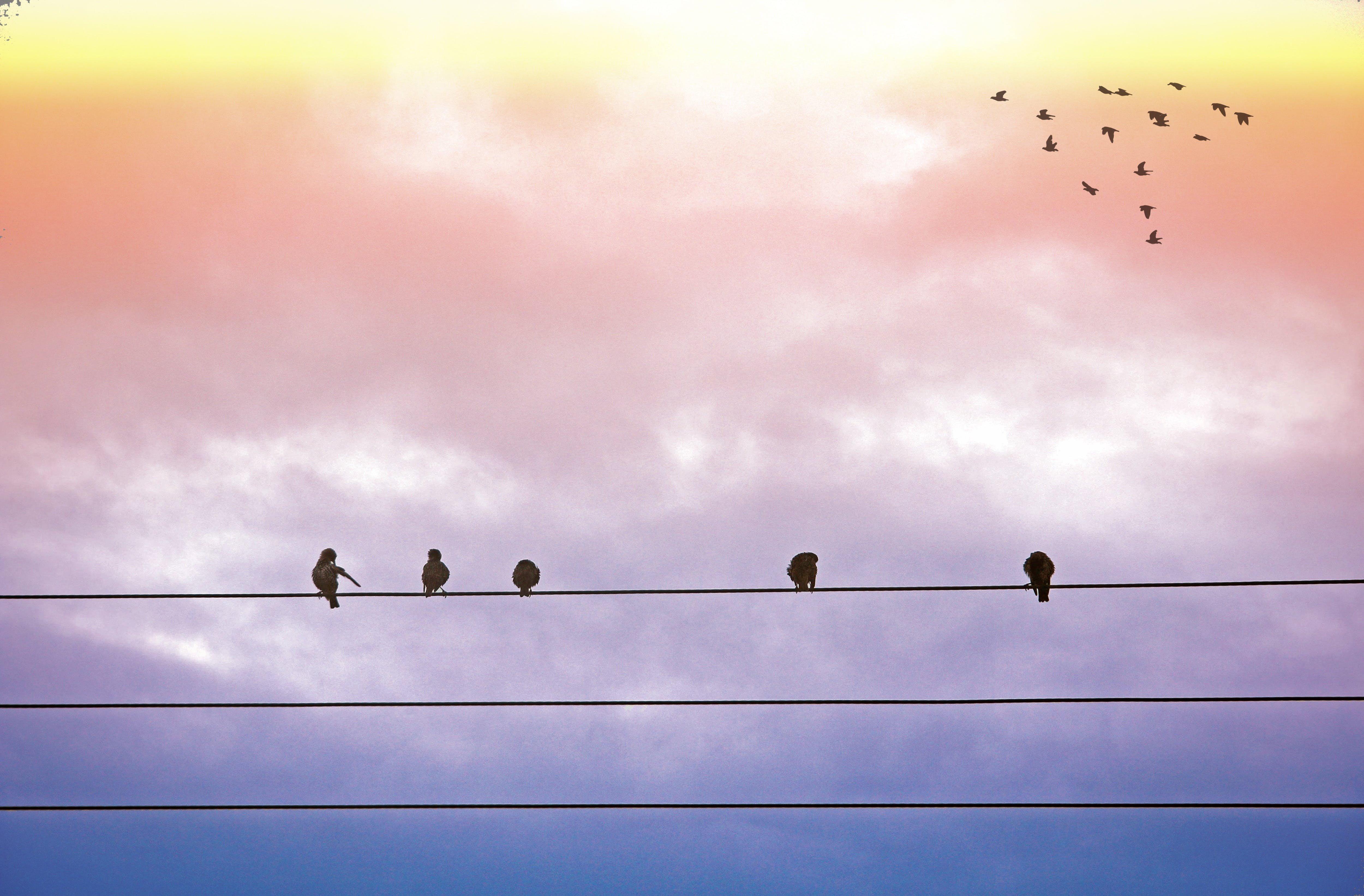 5 Black Feather Bird Standing on Electric Cable