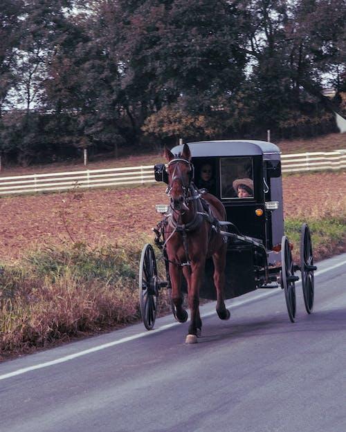 Безкоштовне стокове фото на тему «амішів хлопчик, баггі, дорога, кінь»