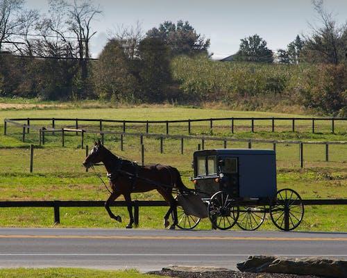 Gratis arkivbilde med buggy, hest