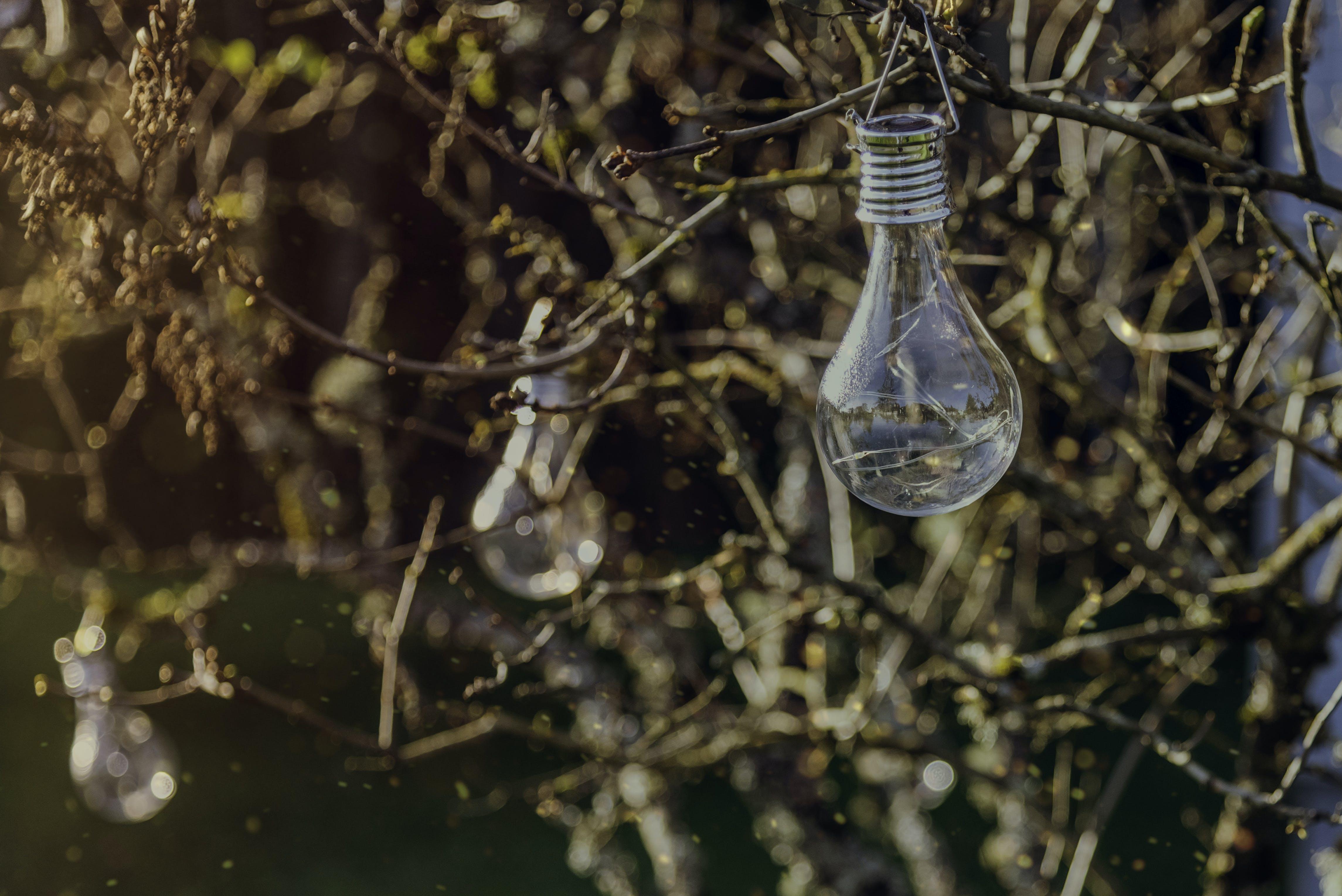 of bulbs, bush, christmas, decoration