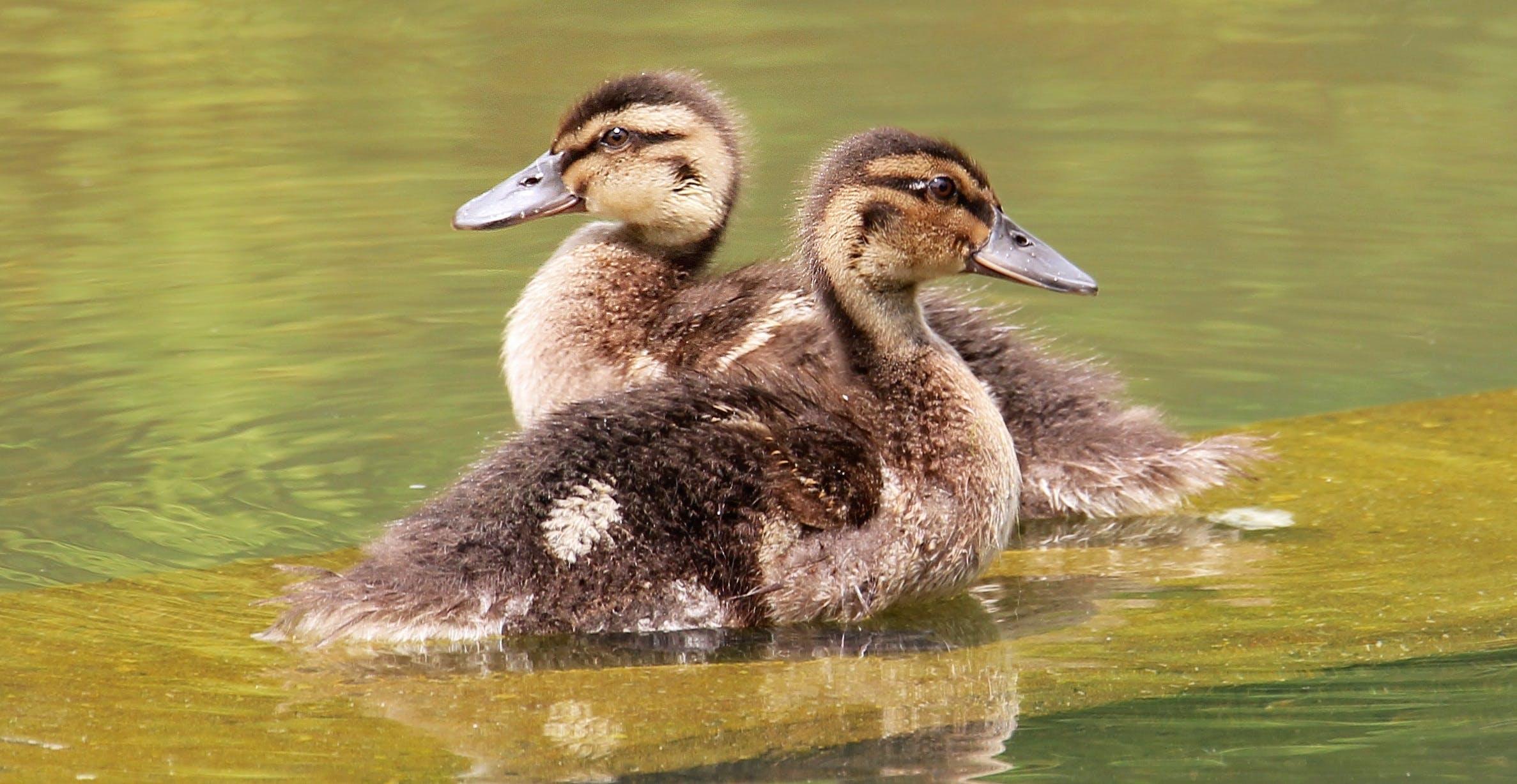 Free stock photo of nature, bird, water, summer