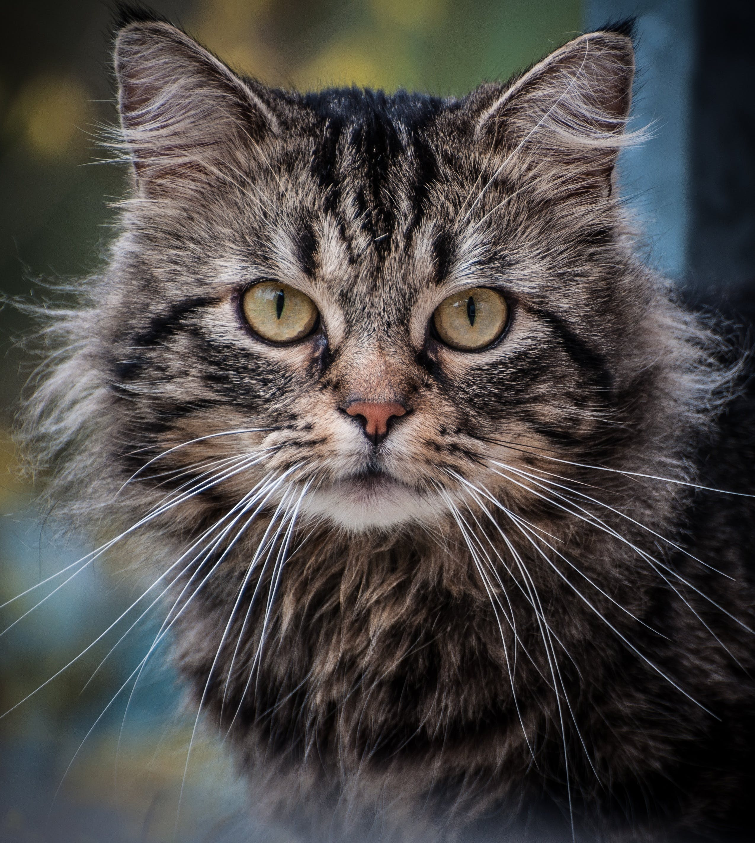 Close Up Photography on Gray Cat