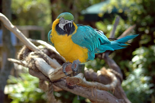 Free stock photo of nature, bird, blue, yellow