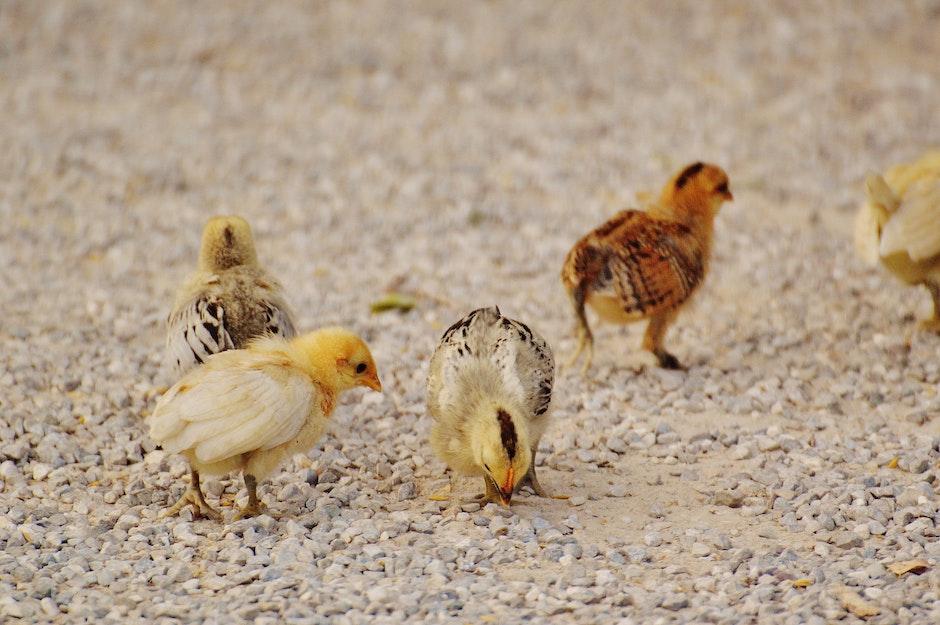 Aves alimento tóxicos