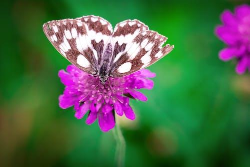 Безкоштовне стокове фото на тему «HD шпалери, запилення, квітка, комаха»