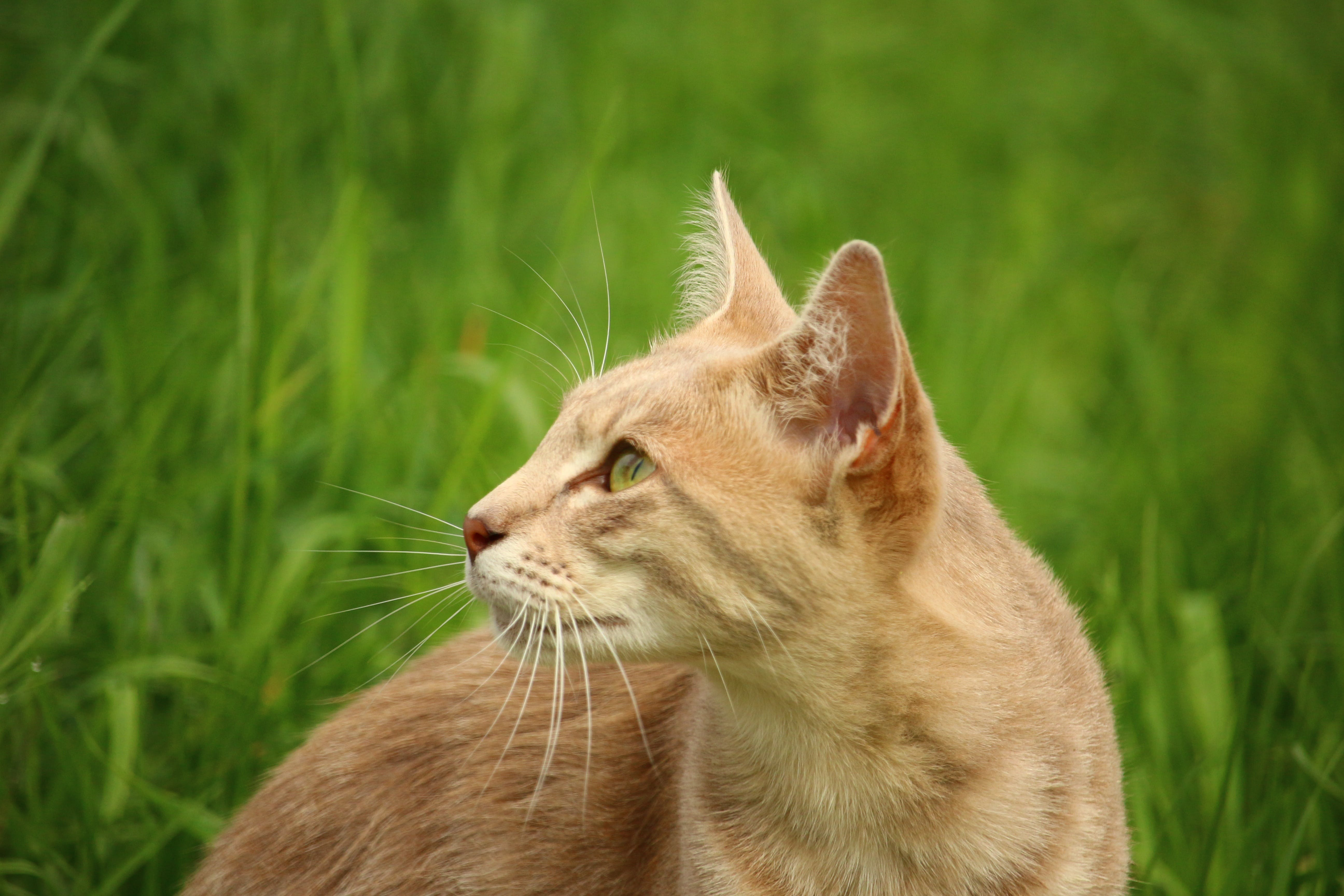 Tan Cat Beside Green Grass during Daytime