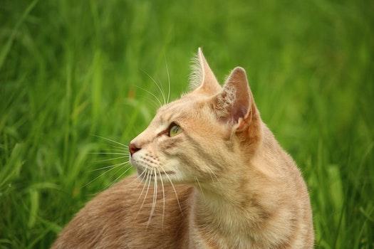 Tan Cat Beside Green Grass during Daytime