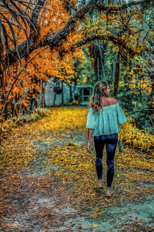 Free stock photo of autumn mood, east coast, fall colors