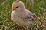 bird, animal, cute