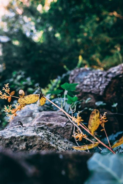Imagine de stoc gratuită din arbore, arbori, buștean, culori