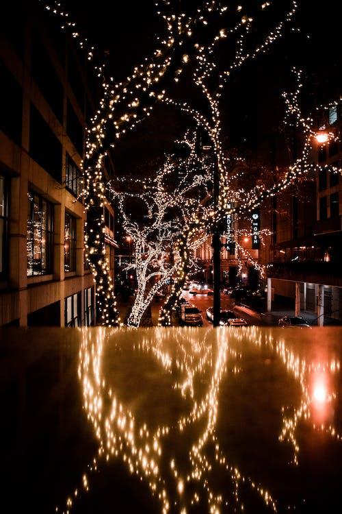 Imagine de stoc gratuită din arbore, beculețe de crăciun, celebrare, copac