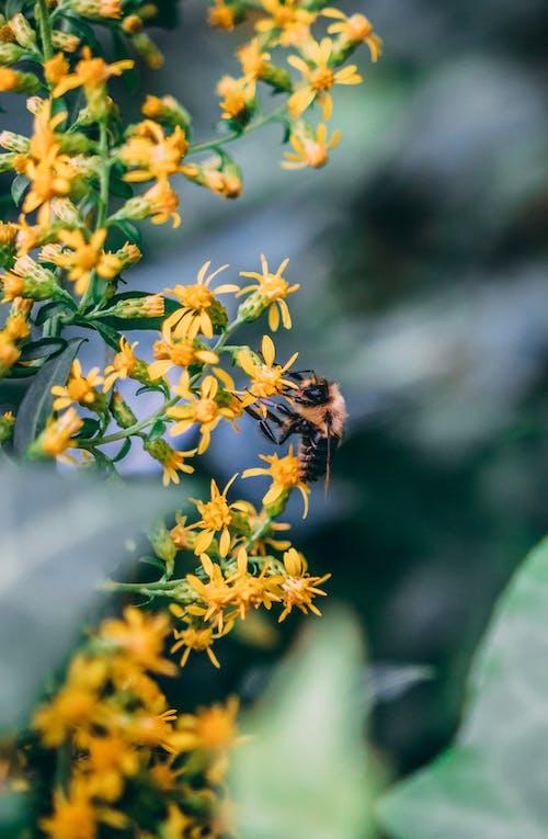 Imagine de stoc gratuită din albină, albine domestice, bâzâit, culori de toamnă