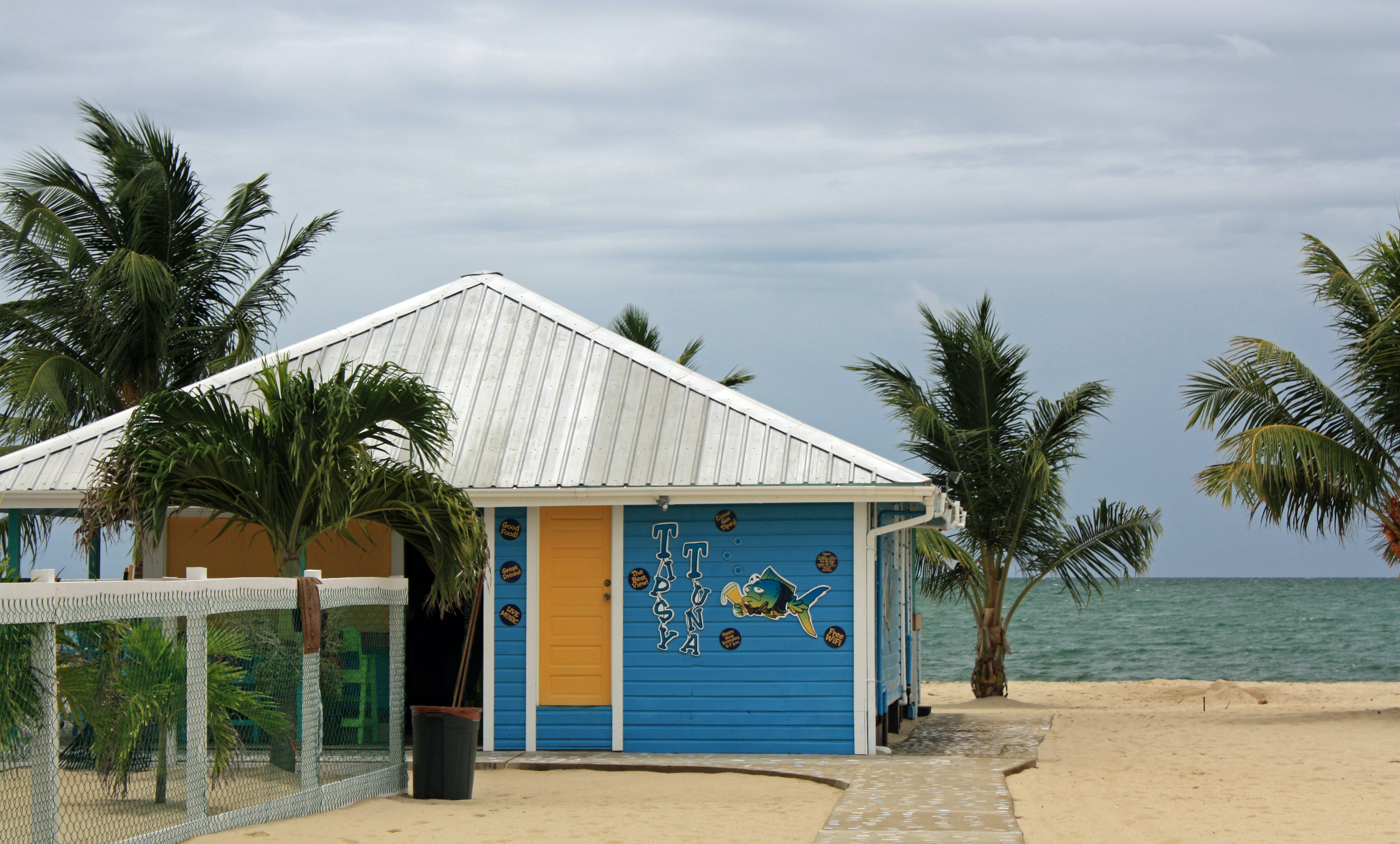 Free stock photo of beach, belize, hut, palm tree
