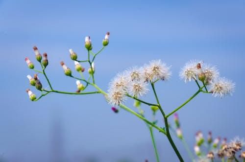 Darmowe zdjęcie z galerii z błękitne niebo, kwiaty, naturalny, piękne kwiaty