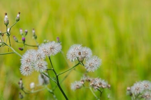 Darmowe zdjęcie z galerii z kwiat, naturalny, piękne kwiaty, piękno natury