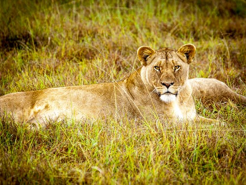 Kostnadsfri bild av däggdjur, djur, djurfotografi, fält