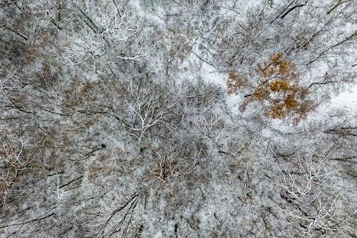 Foto d'estoc gratuïta de arbres, bosc, constipat, des de dalt