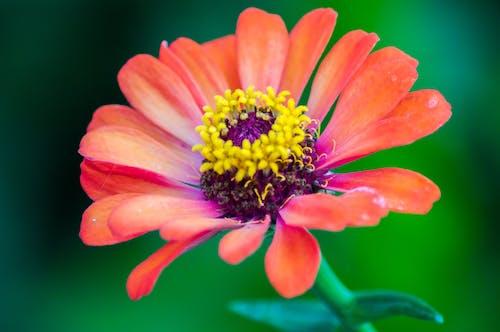 マクロ, マクロ撮影, 花の無料の写真素材