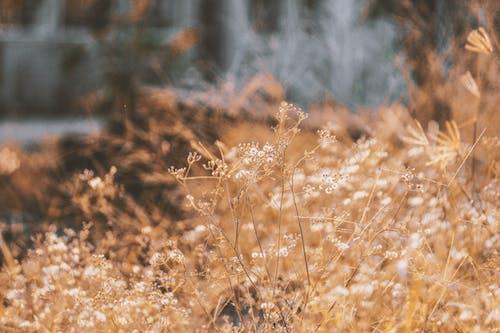 คลังภาพถ่ายฟรี ของ ธรรมชาติ