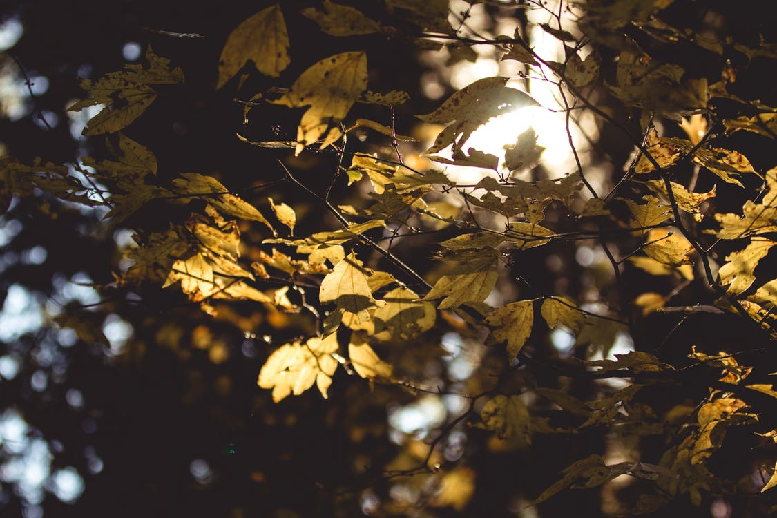 #autumn, #листья, дерево папок