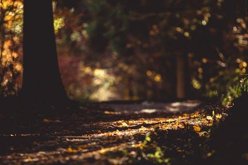 Бесплатное стоковое фото с #autumn, #trees