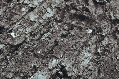 moldy, 原本, 吠, 天性 的 免費圖庫相片