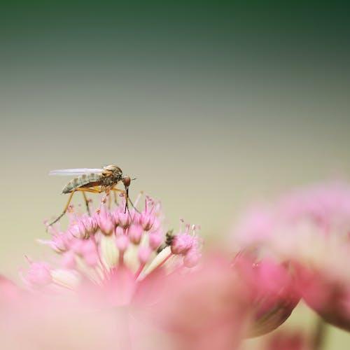Kostnadsfri bild av blomma, blommor, flora, insekt